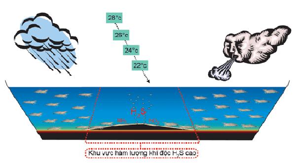 Khí độc tích tụ nhiều dưới đáy ao nuôi - cách xử lý khí độc trong ao nuôi tôm
